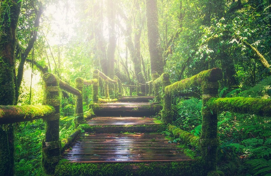 Bosque de jungla tropical