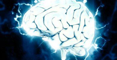 cerebro humano y neurotransmisores