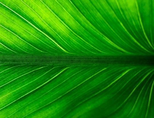 Xilema y floema de planta