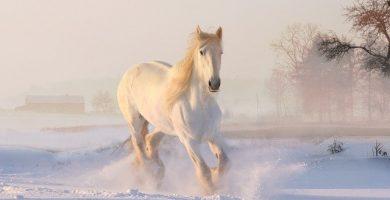 caballo blanco en movimiento desplázandose