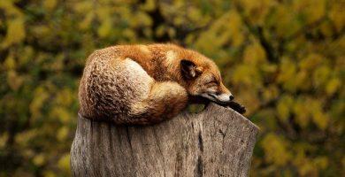 diferencia entre hibernar y dormir