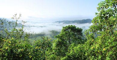 Ecosistema de una selva