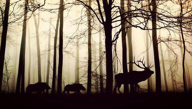 Animales herbívoros y carnívoros en el bosque