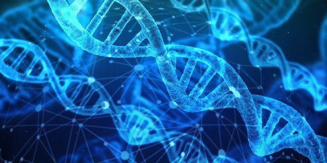 Cadena biológica y bioquímica