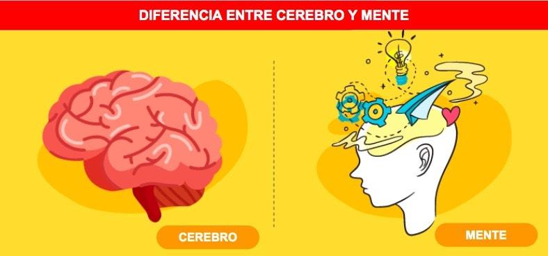 Diferencias entre cerebro y mente