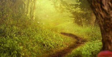 Bosque con arbustos y hierbas