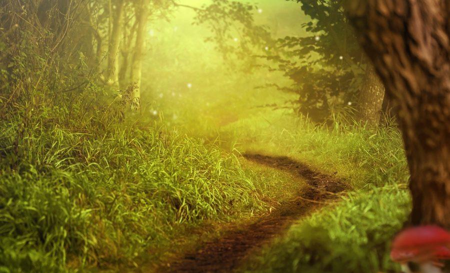 Bosque de árboles y arbustos
