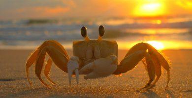 Exoesqueleto de un cangrejo